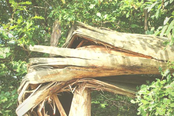 Baum Schadensfall