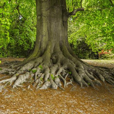 Baumgutachten und Eingehende Untersuchungen