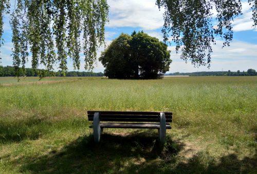 Ausflugsziel – Die Schöne Eiche in Harreshausen