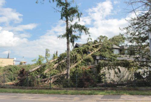 Die 5 wichtigsten Informationen zur Baumkontrolle