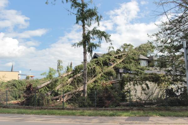 Sturmkontrolle Baum