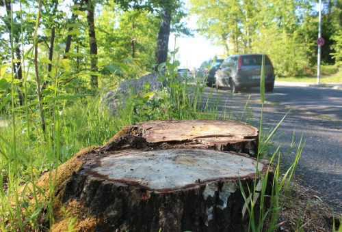 Baumschutzsatzung – Argumente zum Erhalt von Stadtbäumen