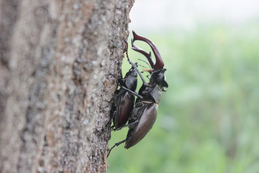 Erhalt der Artenvielfalt