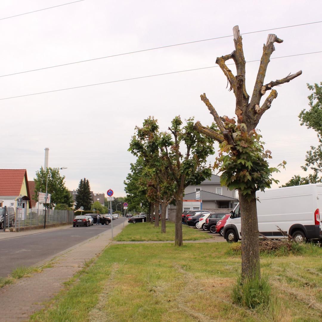 Baumschutzsatzung zum Schutz der Krone